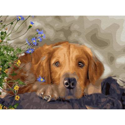 Картина по номерам 40х50 Ретривер (28 цветов)